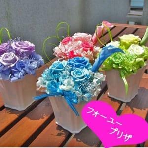枯れない魔法のお花「フォーユープリザ」