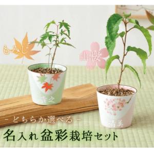 盆彩 栽培セット