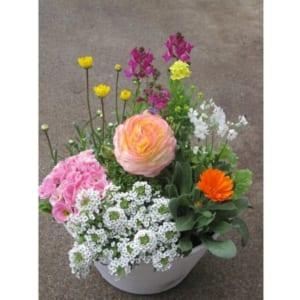 一鉢飾ると季節を感じられるお得で嬉しい鉢植え