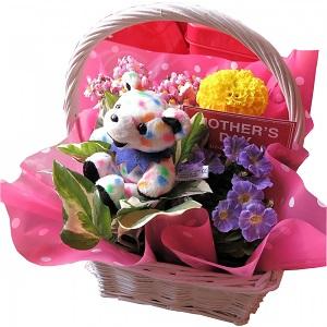 母の日 鉢植え ビーンベアー入 季節のお花お任せ 母の日 花 人気 プレゼント by フラワーガーデン リーブス