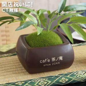 【名入れ】CT触媒のおしゃれな観葉植物