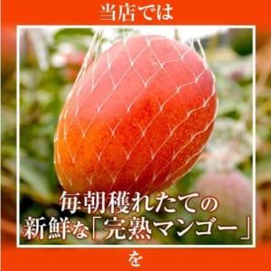 【宮崎産】超特大!朝獲れ厳選完熟マンゴー