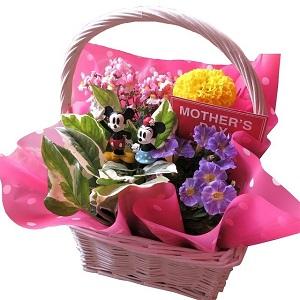 母の日 鉢植え ミッキー ミニー入り フラワーギフト 季節のお花お任せギフト ミッキーマウス ミニー入り 母の日 花鉢 プレゼント by フラワーガーデン リーブス