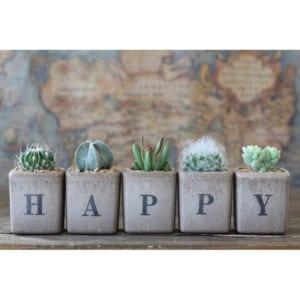 サボテン多肉植物 HAPPY 5個セット by GreenFactory