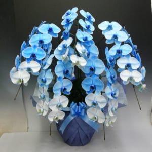 【胡蝶蘭】豪華な大輪青いコチョウラン5本立て