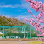 【入学祝い】今春に高校へ入学する姪へ贈る素敵なプレゼント10選