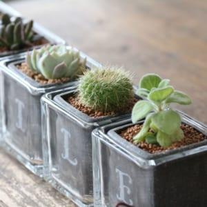 サボテン多肉植物 SMILE ガラスキューブ5個セット