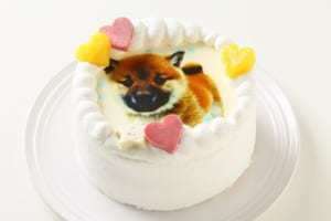 ワンコ写真ケーキ 12cm