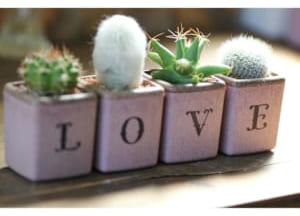 サボテン LOVE 4個セット by GreenFactory