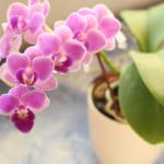 退職祝いの花は胡蝶蘭がベスト!贈るポイントと人気の胡蝶蘭ギフトをご紹介