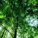 記念日ギフトが自然環境再生につながる「Present Tree & URBAN SEED BANK」