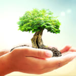 記念日ギフトが自然環境再生につながる「Present Tree・URBAN SEED BANK」