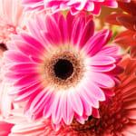 入学祝いに花を贈る!人気の花スイーツや花雑貨も紹介【花づくし】