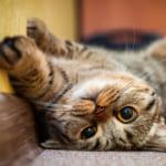 【母の日特集】猫好きのお母さんにおすすめ!キュンとくる猫グッズ25選をご紹介